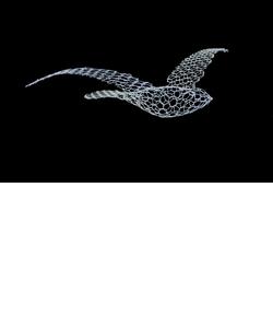 【受注生産品】Birds バード(M)
