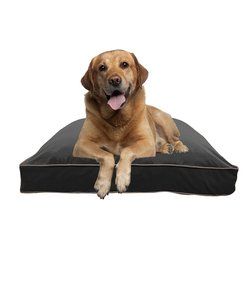 Doggybo Max