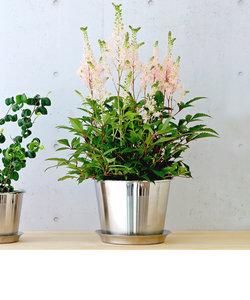 plecta フラワーポットセット 植木鉢 Φ150