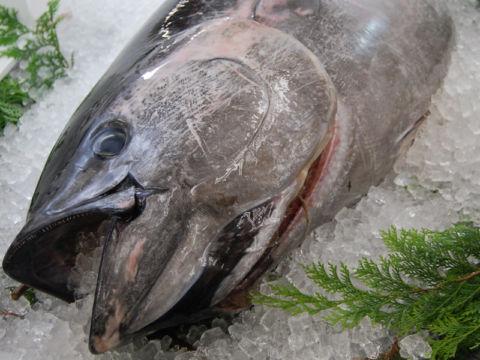 回転すし 金の魚魚丸