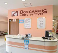 DOG CAMPUS doggy temporary custody