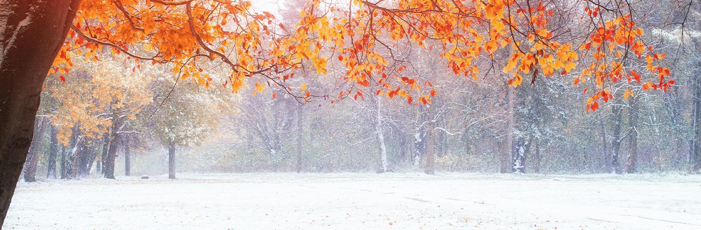时令的生活以凑齐,爱季节